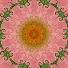flowers 006b by craftysue2, via Flickr