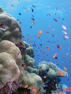 1st visit: 2002. Great Barrier Reef, near Cairns, Australia.