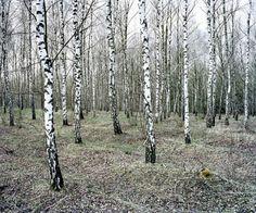 Green Silence ©Daniel Kovalovszky