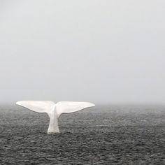 Whale Watching in the Atlantic Ocean