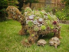 Topiary Tortoise for Garden - The Tortoise table. i would not use the grass Tortoise Habitat, Tortoise Table, Succulent Display, Sulcata Tortoise, Reptile Room, Alpine Garden, Outdoor Projects, Diy Projects, Animal Tracks
