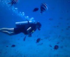 Padi open water diving course - Koh Tao ♡