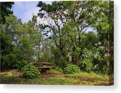 Green serenity - canvas print by Ren Kuljovska. All canvas prints are professionally printed, assembled, and delivered ready-to-hang on your wall. Choose from multiple print sizes, border colors, and canvas materials.  #finerart #homedecor #homedecoridea #fineartprint #giftidea  #canvasprint #canvas #greenparadise #serenity #greenery Wall Art Prints, Fine Art Prints, Canvas Prints, Picture Walls, Design Art, Graphic Design, Decor Ideas, Gift Ideas, Pin Pin
