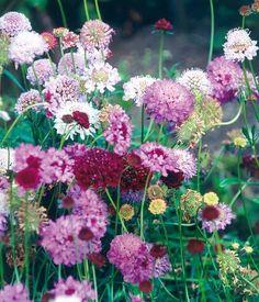 Flores para un jardín romántico