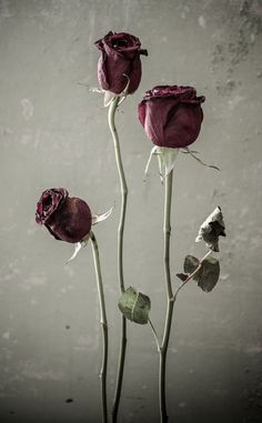 I'm inspired by beauty formed by nature. A dried rose is just as beautiful as a fresh one.