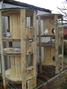 Made from industrial spools (like for overhead lines) Awesome! Would be lovely for button quail or pigeons!!!