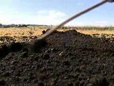 Aprenda a fazer um canteiro de cenoura no seu pequeno terreno
