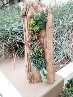 succulents in driftwood - Szukaj w Google