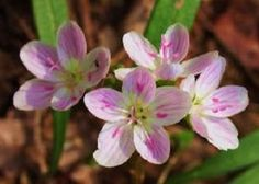 Spring is time for Pure Michigan Blossoms - Promote Michigan