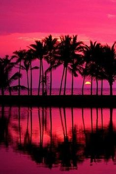 A Palm Trees at Sunset