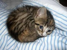 The cutest kitten in the whole wide world. | 50 Animal Pictures You Need To See Before You Die