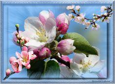 My flowers pancreas
