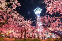 Edition] Sakura in Japan: Forecast Maps, Top Cherry Blossom Spots, and More Await! Cherry Blossom Japan, Cherry Blossom Season, Japan Travel, Maps, Tower, Bloom, Seasons, Spring, Bb