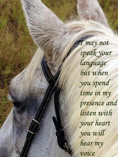 Loveeeeee!!!! I am telling you there is something so special about a rider and her horse!