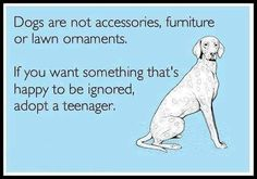 Dogs are not accessories, furniture, or lawn ornaments. If you want something that's happy to be ignored, adopt a teenager.
