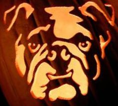 [linked image]Bulldog Pumpkin