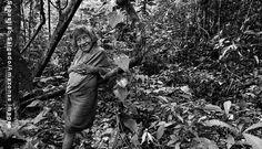 Amerytxia é a anciã da comunidade Awá. Ela decidiu viver sozinha na floresta, distante da Aldeia Juriti, com apenas uma rede e uma fogueira (Sebastião Salgado)
