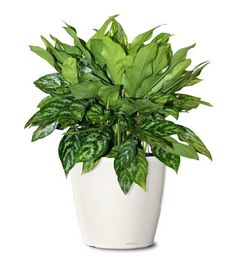 1000 images about buy office plants office foliage office