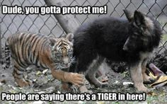 Animal captions are awesome.