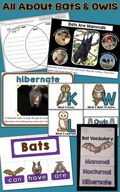 Bats and Owls Unit: PowerPoint and Printables, Nonfiction Elementary Science, Science Classroom, Kindergarten Activities, Writing Activities, Classroom Ideas, Informational Writing, Informative Writing, All About Bats, Bat Facts