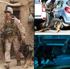Military Working Dogs 101 - Chapter 2(g):  Walking Patrol   Walking patrol duties include checking buildings, parking lots, industrial complexes, open areas and housing areas.