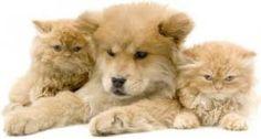 Some Important facts regarding pet insurance