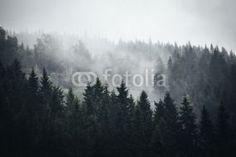 Fog in Norwegian Forest #536559251 - Twoje-Fototapety.pl