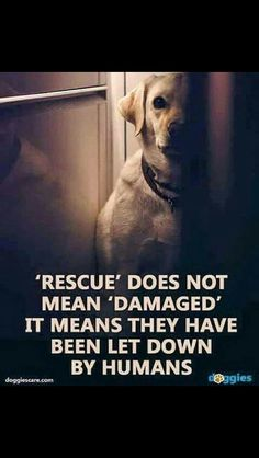 I love both of my rescue babies. One came from a recuse dog that was resuced without the knowledge that she was pregnant. If she wasn't rescued when she was, what would happened to her and her 3 babies?
