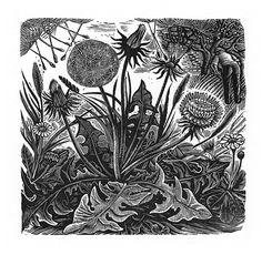 George Tute. One Years Seeding. 1981. (wood engraving)