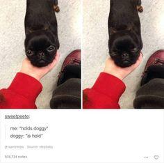 Pup holder - Imgur