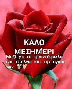 Rose, Pink, Roses