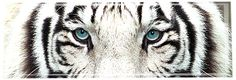 TIGERS - Physical Characteristics