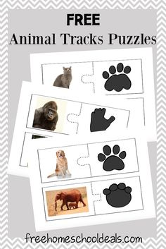 This is a post by Free Homeschool Deals contributor, Tara at Embark on the Journey. My daughter loves animals of all kinds. For three years, we studied anima Nature Activities, Science Activities, Preschool Activities, Animal Activities For Kids, Animal Footprints, Animal Tracks, Animal Science, Animal Habitats, Safari Party
