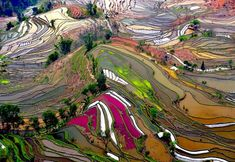Thierry Bornier took this amazing photograph of terraced rice fields in Yunnan, China. The aerial view of the different sections of the rice fields shows a wide range of colors, and National Geographic chose it as Photo of the Day on June Beautiful World, Beautiful Places, Amazing Places, Beautiful Scenery, Birds Eye View, National Geographic Photos, Aerial Photography, Landscape Photography, Nature Photography