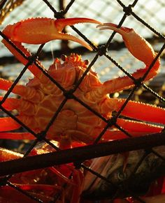 Bering Sea Crab Fishermen's Tour provides Alaska (AK) Shore Excursions, Ketchikan Commercial Fishing, Crab Fishing Tours and More! Cruise Excursions, Cruise Destinations, Shore Excursions, Cruise Vacation, Family Cruise, Vacation Spots, Norwegian Cruise Line, Seafood Place, Sea Crab