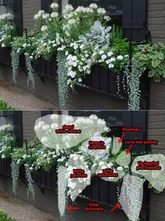 32 Beautiful Ideas Cascading Flowers For Window Boxes Best 40 B. - 32 Beautiful Ideas Cascading Flowers For Window Boxes Best 40 Beautiful Cascading F - Container Flowers, Container Plants, Container Gardening, Gardening Vegetables, Gardening Hacks, Hydroponic Gardening, Kitchen Gardening, Succulent Containers, Gardening Quotes