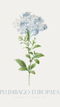 Botanical Flowers, Flowers Nature, Botanical Prints, Botanical Drawings, Botanical Illustration, Watercolor Illustration, Flower Background Wallpaper, Flower Backgrounds, Flower Prints