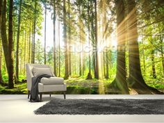 Forest Sun wall mural room setting