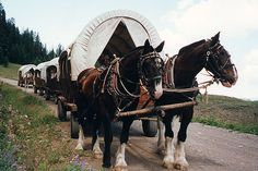 Covered Wagon Train Vacations . . . sounds a little cheesy, but it could be fun.