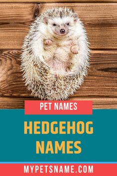 Those days where the deifinition of 'household pets' was limited to dogs, cats and bunny rabbits are long gone. So if you've brought home a small, exotic pet, check out our list of Hedgehog names to get your mind racing with more ideas. Hedgehog Names, Hedgehog Pet, Cute Hedgehog, Hedgehog For Sale, Rabbit Cages, Bunny Names, Pet Names, Hedgehog Supplies, Cages For Sale