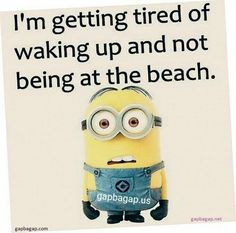 18 Times Minions Knew Exactly How We Felt - World's largest collection of cat memes and other animals Minion Humour, Minion Jokes, Minions Quotes, Funny Minion, Minion Sayings, Great Quotes, Funny Quotes, Inspirational Quotes, Happy Quotes