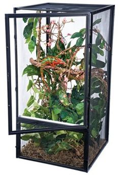 45 Best Chameleon Habitat Amp Cage Examples Images