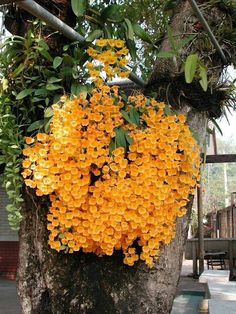 Beautiful orchid gowing on a tree https://www.houseplant411.com/houseplant/orchids-how-to-grow-care