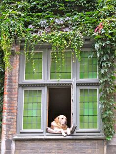 I saw this dog in Brugge, Belgium on his favorite perch overlooking one of the canals where tourist boats pass. He has a FB page!