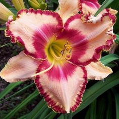 HOW SWEET THE SOUND - DF - B4E - Selman 2010 - DAYLILY - Listing # 197869 - Daylily Auction - Flower Garden Auction