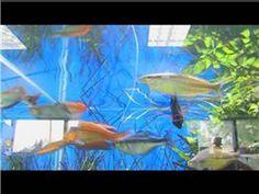 Tropical Fish Videos