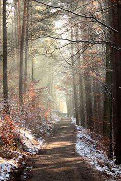 serendipitous wanderings, our minds, our souls and our body should look toward endless paths of adventures Beautiful World, Beautiful Places, Winter Szenen, Winter Walk, Autumn Fall, Autumn Leaves, Photos Voyages, All Nature, Walk In The Woods