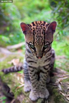 Just a little cat, very little....