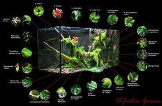 Plants for vivarium Aquarium Setup, Aquarium Aquascape, Aquarium Design, Aquarium Fish Tank, Planted Aquarium, Gecko Terrarium, Terrarium Plants, Gecko Vivarium, Aquascaping