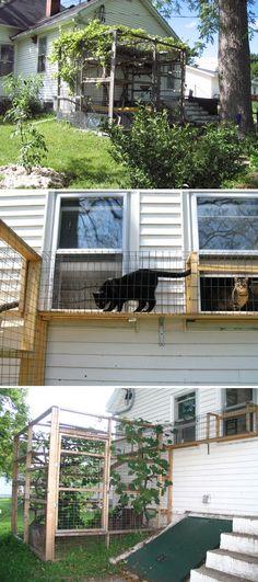 Cat Jungle Gym, Cat Gym, Car Poses, Outdoor Cat Enclosure, Reptile Enclosure, Gazebo, Cat Garden, Outdoor Cats, Outdoor Decor
